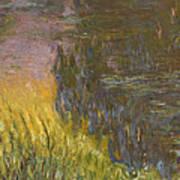 The Water Lilies, Setting Sun Art Print