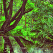 The Water Margins - Nutclough Woods Art Print