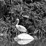 The Waterbirds Art Print