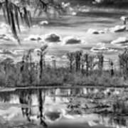 The Wetlands Art Print