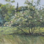 The Wild Apple Tree Art Print