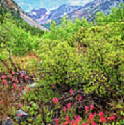 The Wildflowers Of Lundy Canyon Art Print