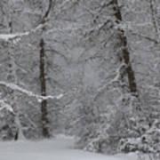 The Winter Path Art Print