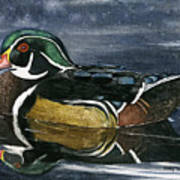 The Wood Duck Art Print