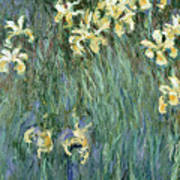 The Yellow Irises Art Print