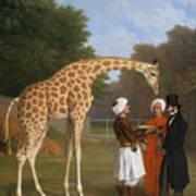 The Zoological Garden Art Print