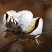 Them Cotton Bolls Art Print