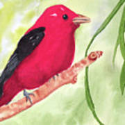 Theodore Tanager Art Print