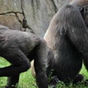 Thinking Gorilla Art Print