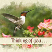 Thinking Of You Hummingbird Garden Jewel Greeting Card Art Print