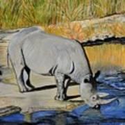 Thirsty Rhino Art Print