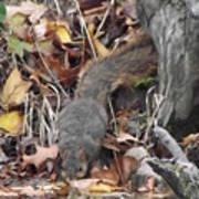 Thirsty Squirrel Art Print