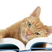 This Tabby Cat Loves Books  Art Print