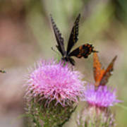 Thistle Pollinators - Large And Small Art Print