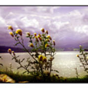 Thistledown Time Art Print