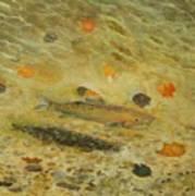 Thorndike Pond Trout Art Print