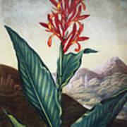 Thornton: Indian Reed Art Print