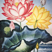 Thornton: Lotus Flower Art Print