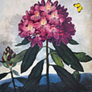 Thornton: Rhododendron Art Print