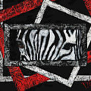 Those Eyes...zebra Art Print