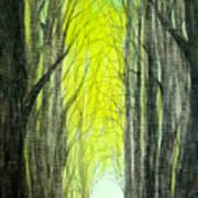 Though The Forest To The Light  Art Print