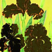 Three Black Irises, Painting Art Print