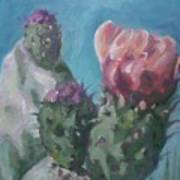 Three Cactus Blossoms Art Print