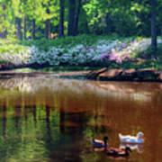 Three Ducks At The Azalea Pond Art Print