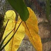 Three Exotic Leaves Art Print