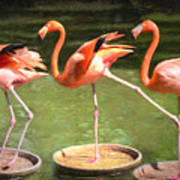 Three Flamingos Art Print