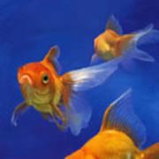 Three Goldfish Art Print by Simon Sturge