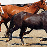 Three Horses Galloping Art Print
