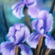 Three Iris Art Print