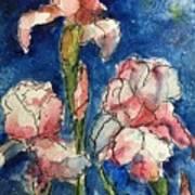 Three  Iris' Art Print
