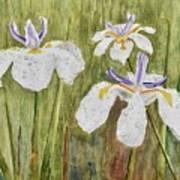 Three Irises In The Rain Art Print