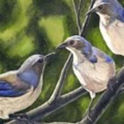 Three Jays Art Print