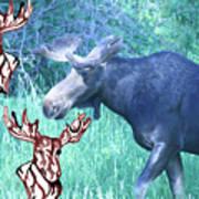 Three Moose Art Print