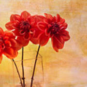 Three Orange Dahlias Art Print by Rebecca Cozart