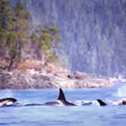 Three Orca Whales Art Print