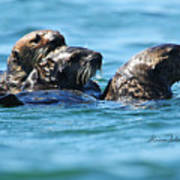 Three Otters Art Print