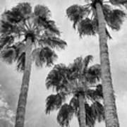 Three Palms Bw Palm Springs Art Print