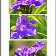 Three Photos For The Price Of One  Art Print