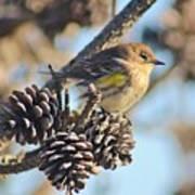 Three Pine Cones And A Little Bird Art Print