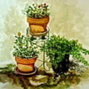 Three Potted Plants Art Print