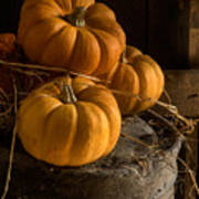 Three Pumpkins On A Bucket Art Print