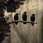 Three Ravens Branch Out Art Print