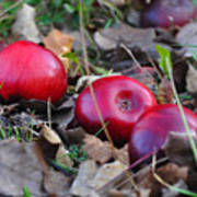 Three Red Apples Art Print