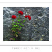 Three Red Mums Poster Art Print