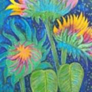 Three Sunflowers In The Mid Summer Night  Art Print
