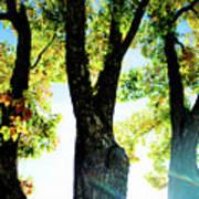 Three Tree Light Art Print
